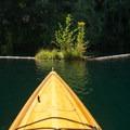 Flowers and logs are abundant along the banks of Lake Kokanee.- Lake Kokanee to Kokanee Falls
