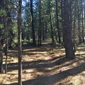 Classic Deschutes forest mountain biking.- Phil's Trail Complex: Ben's Trail to Phil's Trail Loop