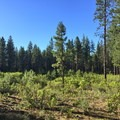 One of the open meadow sections in the trail.- Phil's Trail Complex: Ben's Trail to Phil's Trail Loop