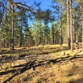 The results of the recent forest restoration/thinning efforts.- Phil's Trail Complex: Ben's Trail to Phil's Trail Loop