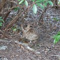 Rabbits and other small critters can be seen around the summit.- Blood Mountain, Freeman Trail Loop