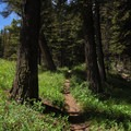 The first few miles are forested.- Sepulcher Mountain