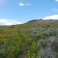 Mountainside meadow wildflowers.- Sepulcher Mountain