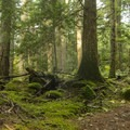 The route going up offers a couple of challenging climbs.- Cabin Fever + Millipede Mountain Bike Trails