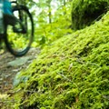 The forest is teeming with mushrooms.- Cabin Fever + Millipede Mountain Bike Trails