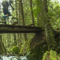 Lots of bridgework along this route.- Cabin Fever + Millipede Mountain Bike Trails