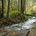 Stream crossing along the Cabin Fever.- Cabin Fever + Millipede Mountain Bike Trails