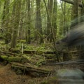 Millipede is fast and flowy.- Cabin Fever + Millipede Mountain Bike Trails