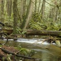 More great rest stops along the way.- Cabin Fever + Millipede Mountain Bike Trails