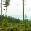 The second half of the trail cuts through a wood block.- Cabin Fever + Millipede Mountain Bike Trails