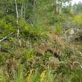 The trail runs fast toward the end through dense bushes.- Cabin Fever + Millipede Mountain Bike Trails
