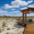 On the boardwalk to Crystal Spring.- Ash Meadows National Wildlife Refuge