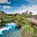Crystal Spring.- Ash Meadows National Wildlife Refuge