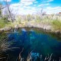 Rogers Spring.- Ash Meadows National Wildlife Refuge