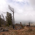 Windswept trees on Bunsen Peak.- Bunsen Peak