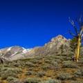 Ascending the east ridge of Shelly Mountain.- White Knob Range Traverse