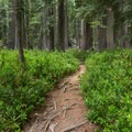The trail is very easy to follow in most places.- Boulder Creek Lakes