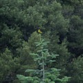 A beautiful bird perches on a tree.- Boulder Creek Lakes