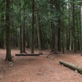 A typical campsite at Round Lake State Park Campground.- Round Lake State Park Campground