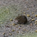 Mice collect the discarded seeds.- Bloedel Conservatory