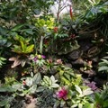 A wide variety of tropical plant life.- Bloedel Conservatory
