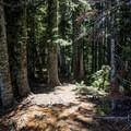 The trail cuts through a thick old-growth forest.- Soda Peaks Lake