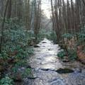 Lovely mountain stream.- Springer Mountain Loop via Three Forks