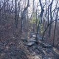 Trail gets rocky near the top.- Springer Mountain Loop via Three Forks
