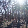 The forested summit.- Springer Mountain Loop via Three Forks