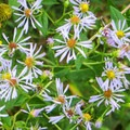 In season, you will see these flowers everywhere.- James Edmond Trail + Black Rock Lake