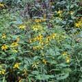 More flowers by the lake.- James Edmond Trail + Black Rock Lake