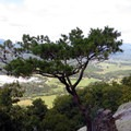 Some trees sprouting straight out of the rock.- James Edmond Trail + Black Rock Lake