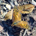 Tons of butterflies of various colors.- James Edmond Trail + Black Rock Lake