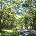 Wawawai County Park Campground.- Wawawai County Park Campground