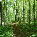 Different kinds of forest accompany the Springer Approach Trail.- Springer Mountain Loop via Len Foote Inn