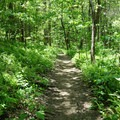 Lush green forest for much of the hike.- Springer Mountain Loop via Len Foote Inn