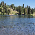 Bloods Lake is a great spot for dogs to cool off on hot summer days.- Bloods Lake