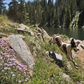 Dogs love this place!- Bloods Lake