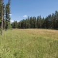 A large meadow not far from camp.- Riverside Campground