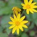 Wildflowers en route to Longs Peak.- Longs Peak: Keyhole Route