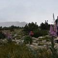 The ascent never relents.- Longs Peak: Keyhole Route