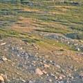 A heard of elk grazing just off of the route to Longs Peak.- Longs Peak: Keyhole Route
