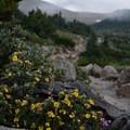 Morning dew on the wildflowers.- Longs Peak: Keyhole Route
