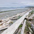 View north up the beach.- Joseph Whidbey State Park Beach