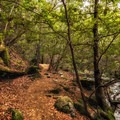 On the trail to Whiskeytown Falls.- Whiskeytown Falls
