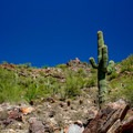 Saguaro cactus and small Palo Verde Trees. These plant species are ubiquitous on any Phoenix trail.- Piestewa Peak Summit Trail, Phoenix Mountain Preserve