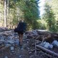 Logs laying across a road washout.- Blanca Lake
