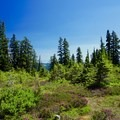 Meadows with wildflowers.- Blanca Lake