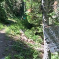Entering the Yolla Bolly-Middle Eel Wilderness.- North Yolla Bolly