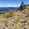 Wildflowers near the peak.- North Yolla Bolly